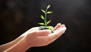 s02_seedling